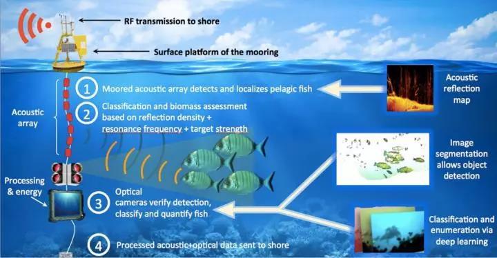 国外科学家发明新型自动化系统:可实时监测鱼群